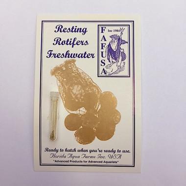 Freshwater Resting Rotifer Cysts (Brachionus calyciflorus) Rotifers