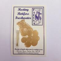 Freshwater Resting Rotifer Cysts (Brachionus calyciflorus) Rotifers 15-20000