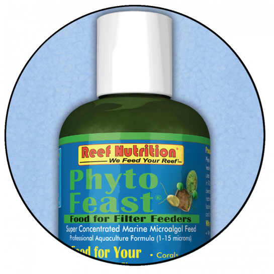 Phyto Feast 5 species concentrated feed 100ml Marine Coral Reef Copepod Phyto LPS SPS